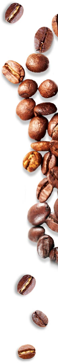 Grains café droit